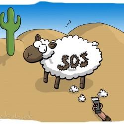 SOS-Schaf